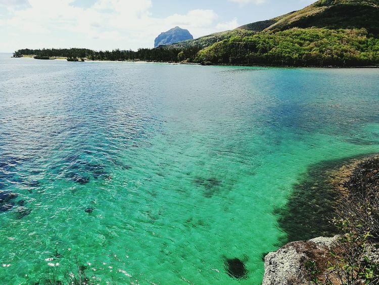 WaterNature Tree Scenics Beauty In Nature Day No People Outdoors Sky Beach Mauritius Macondé