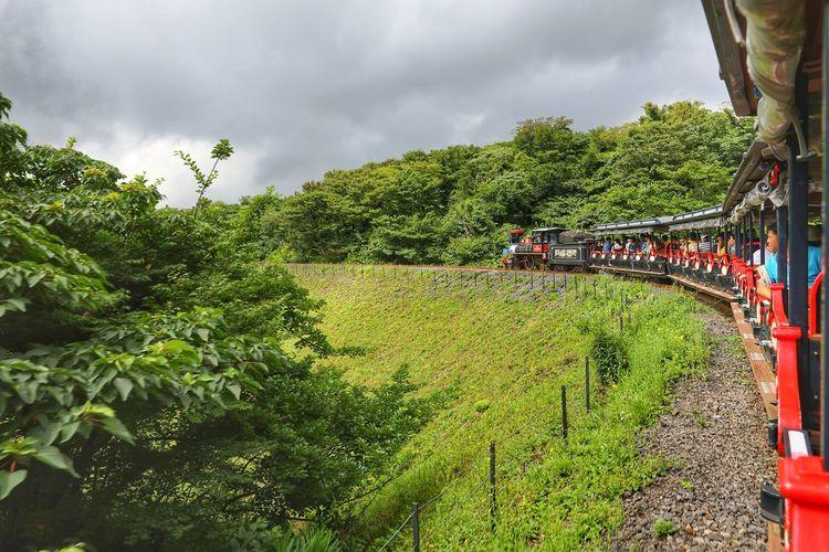 칙칙폭폭 작은 기차와 함께 떠나는 모험~ . . #하루한컷 #에코랜드 #기차 #5DMARK4 #신계륵 #EF2470F28LIIUSM Tree Sky Green Color