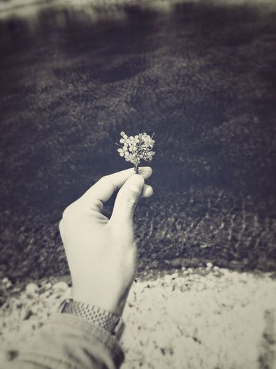Black And White Balck  Sea Water Hand And Flower Summer Human Hand Beach Sand Holding Close-up