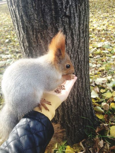 In My Hand Hand Squirrel Squirrel Closeup Animals In The Wild One Animal Nature Outdoors Eating Food Close-up Domestic Animals Portrait No People Feeding  Feeding Squirrels