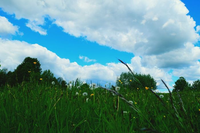 Cloud - Sky Nature Growth Agriculture Sky Rural Scene Outdoors Day Field Tree Blue No People Grass Beauty In Nature Landscape Scenics Flower EyeEm Nature Lover Colours Of Nature Colours Of Life Springtime Beauty In Nature Enjoying Life Clouds And Sky Cloud_collection