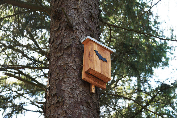 bat box Tree Tree Trunk Trunk Low Angle View Birdhouse Nature Day No People Forest Outdoors Bat Box Bats Nest Box Wood Wooden Bat-box Roosting Box Fauna Environment Ecology Conservation Protection