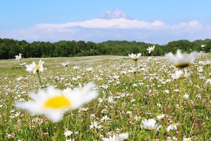 Sun Beautiful Flowers Places Mauntain Field Trip EyeEm Best Shots Meadow