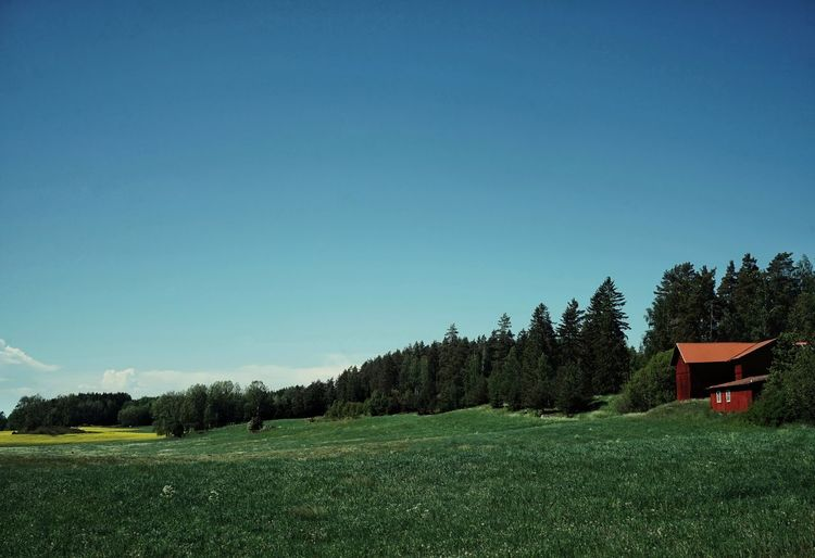 Scenic view of trees on field against clear sky