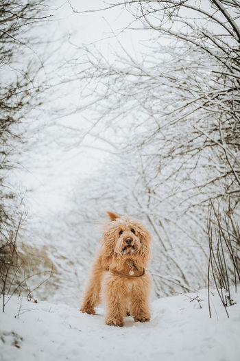 View of dog on snow covered land