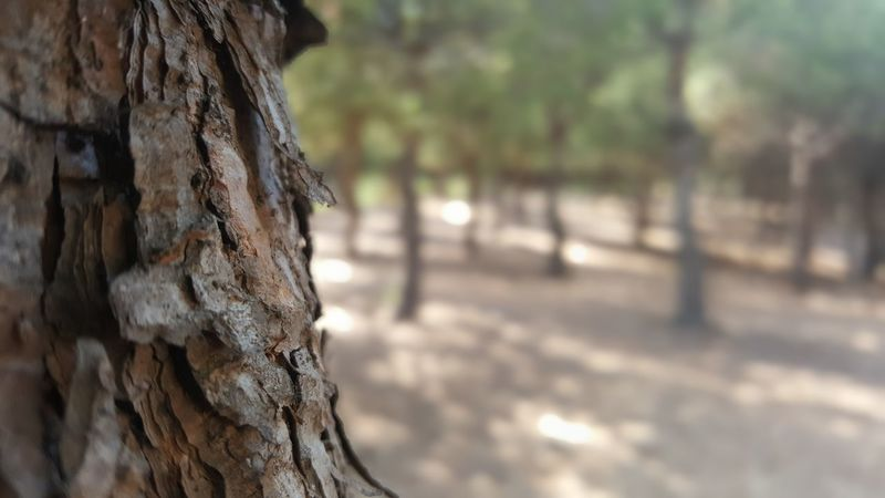 It's all a matter of perspective... Focus Object Focus On Foreground Selective Focus Woods Nature Trees The Week On EyeEm EyeEmNewHere