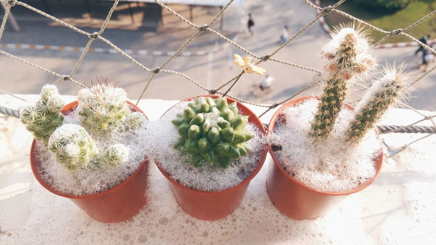 High angle view of succulent plant on window sill