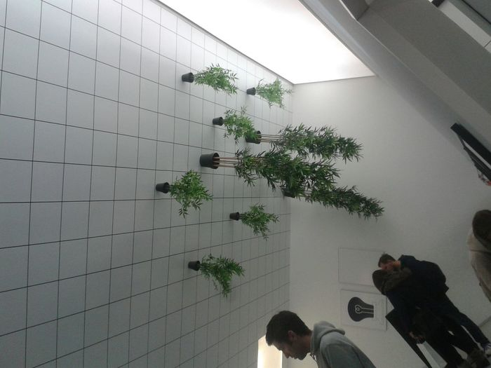 Plants on the ceiling 😁 Museum Of Illusion Plants 🌱 Plants On The Ceiling Indoor Plants Muzej Iluzija Eyeem Zagreb Check This Out Having Fun :) Eyeem Plants
