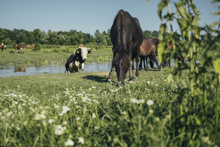 Mammal Animal Animal Themes Domestic Animals Plant Livestock Group Of Animals Vertebrate Domestic Pets Field Grass Land Animal Wildlife Growth Nature Horse Green Color Grazing Agriculture Herbivorous No People Outdoors