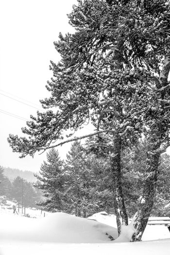 Blackandwhite Beauty In Nature Snowy Forest Tree Snow Winter France