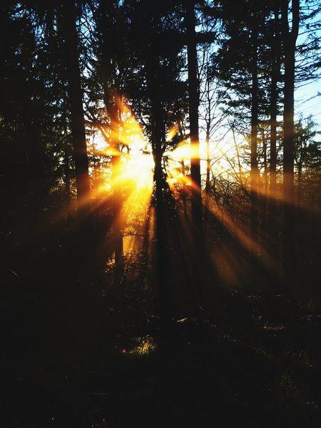 Sonnenstrahlen Sun Forest Mood