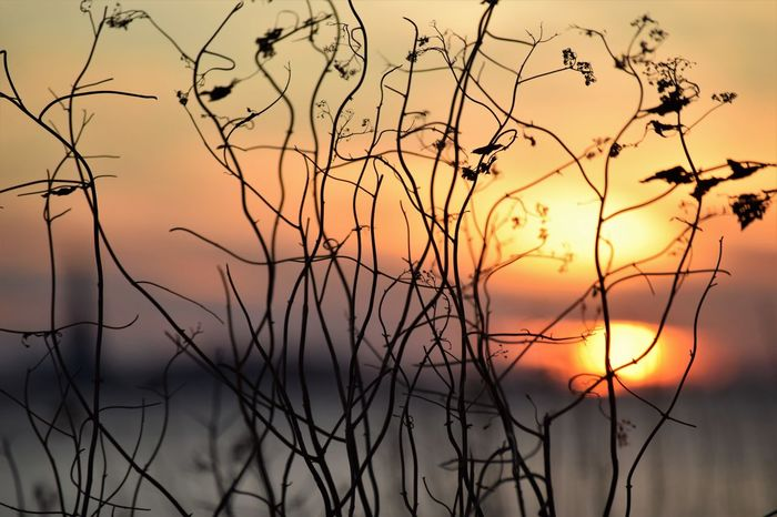 Moments In Life  EyeEm Nature Lover Plants Sun Going Down Beautiful Scene Beauty In Nature Growth Silhouette Sky Sunset