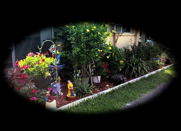 Flower collection Arts Culture And Entertainment Cultures Day Decoration Fish-eye Lens Flower Flower Arrangements Flower Pot Front Or Back Yard Garden Glowing Green Green Color Growing Growth Ideas Ivy Leaf Music Plant Potted Plant Wall