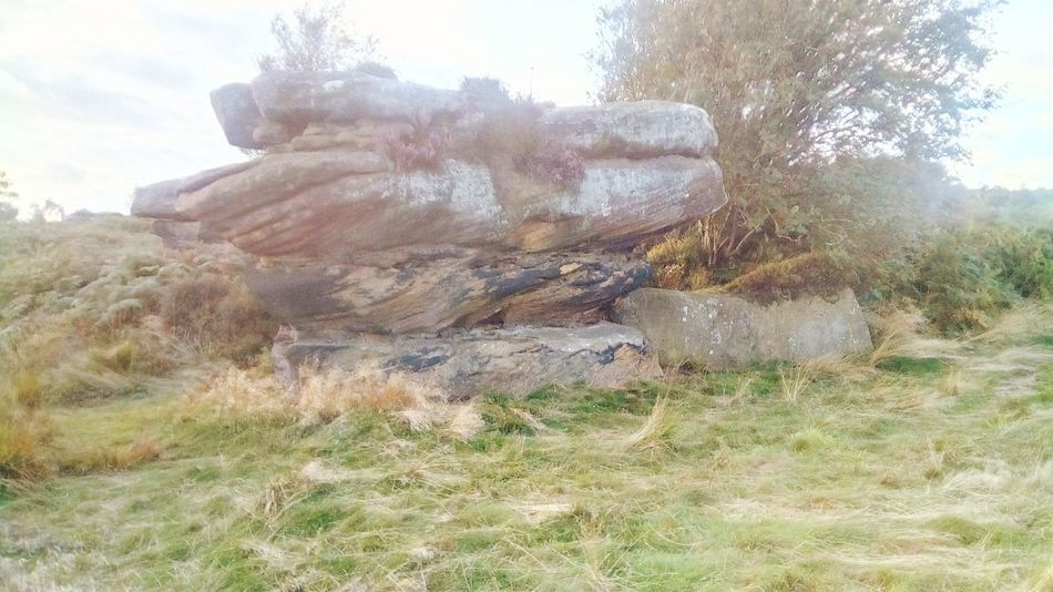 Brimham Rocks Yorkshire Brimhamrocks Brimham Rocks Nidderdale Brimham Moor The Week On EyeEm Outstanding Natural Beauty National Trust 🇬🇧 North Yorkshire Day Outdoors Nature No People Grass Tree Sky Growth