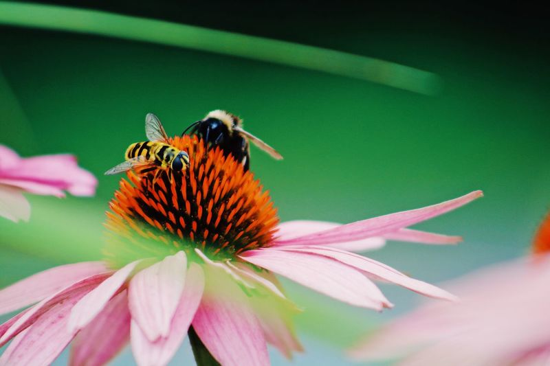 Close-up of insect pollinating on flowers