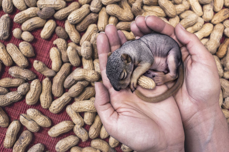 so cute with peanuts Human Body Part Human Hand One Person Holding Outdoors Close-up People Animal Themes Nature EyeEmNewHere Shades Of Winter
