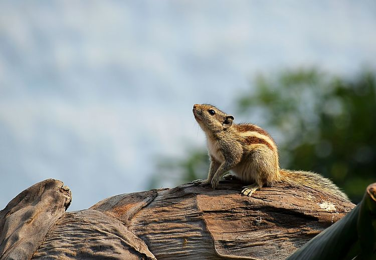 Close-up of squirrel on wood against sky