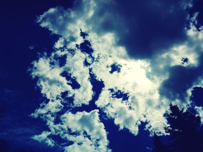 Tree Blue Forest Sky Cloud - Sky Sky Only Wispy Dramatic Sky Cloudscape Treetop Atmospheric Mood Heaven Fluffy