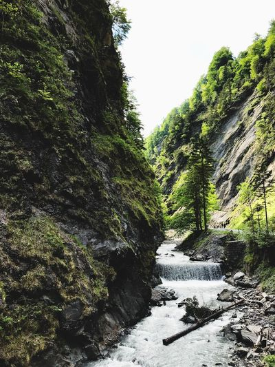 Nature Photography Wildlife & Nature Wildlife Wilderness Heidiland Switzerland Tree Plant Water Nature Day Sky No People Outdoors Green Color Beauty In Nature Land Tranquility Scenics - Nature Tranquil Scene Flowing Water Growth Sunlight Motion