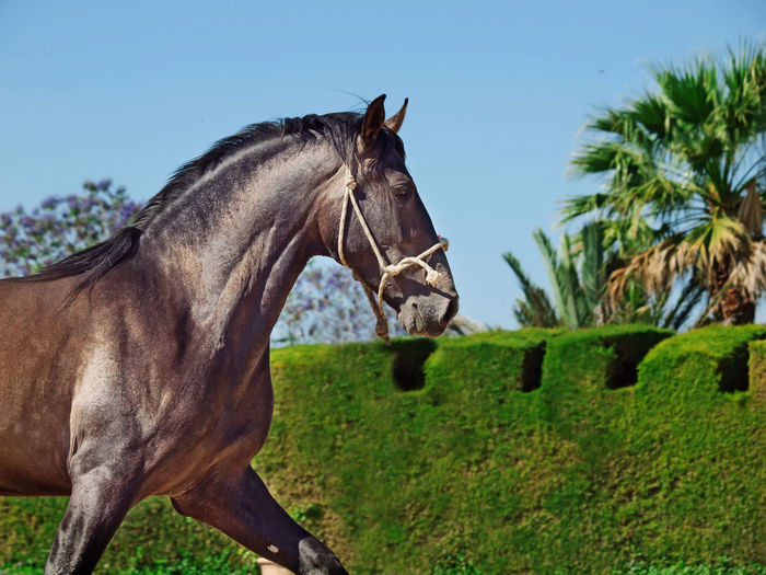 Side View Of Horse Running Against Sky