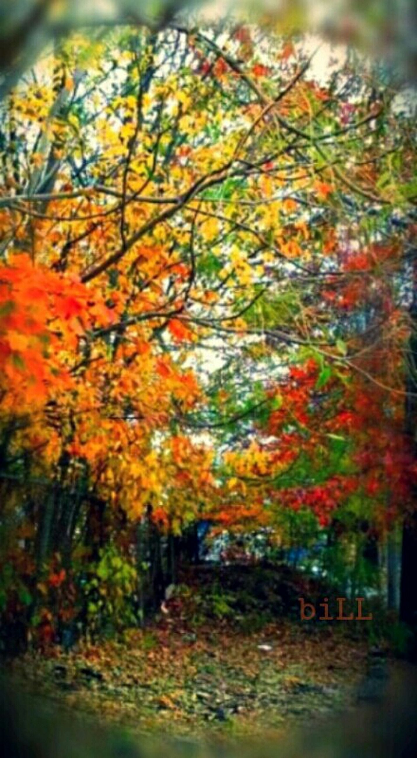 autumn, change, tree, orange color, season, beauty in nature, growth, nature, water, leaf, multi colored, tranquility, flower, red, day, freshness, outdoors, selective focus, no people, focus on foreground