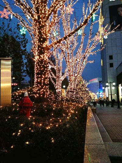 EyeEmNewHere Building Exterior Tree Built Structure Architecture Night Outdoors Christmas Lights Christmas Decoration Christmas