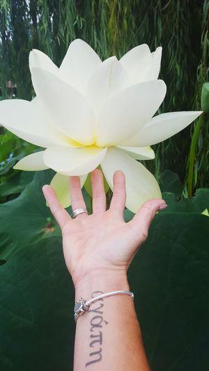 Lotus♥ Lotus Temple Lotus Flower MISHART Mish