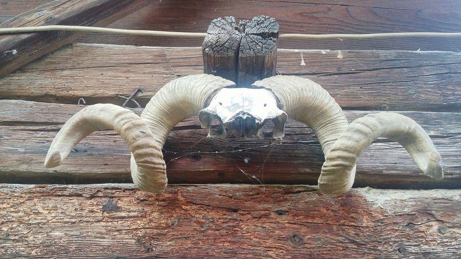 Horns Skully Skulls 💀 Skulls & Bones Skullart SkullOfTheDay Skullface Skull Art Skulls💀 Skulls♥ Skull Face Skullhead Skulls And Bones Skulls Skull Things