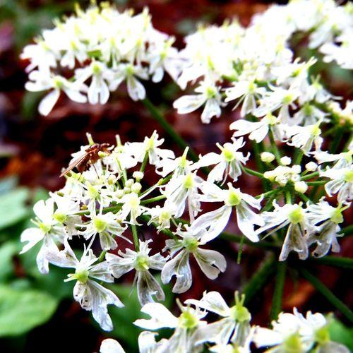 EyeEm Nature Lover Blume Flower Flowers,Plants & Garden Garden Makro Flower Makro Photo Mücke Colourful