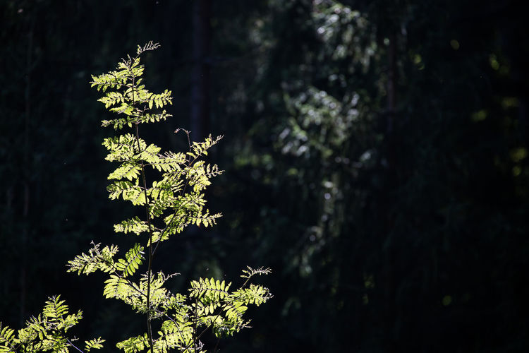 Close-up of tree in forest