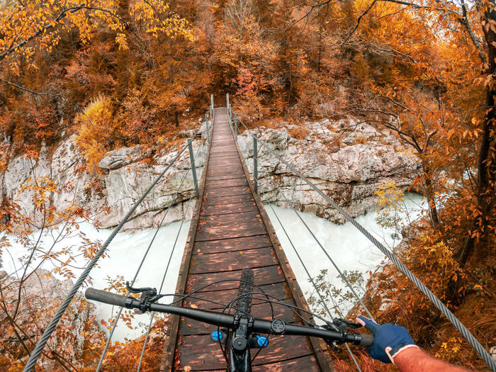 Bridge amidst trees in forest during autumn