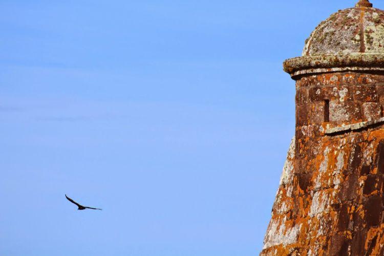 Historical Building The Week On EyeEm Animal Wildlife Architecture Bird Flying Nature Sky EyeEmNewHere