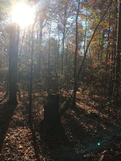 Beauty In Nature Outdoors Bright Brightly Lit Nature Sunlight Growth WoodLand First Eyeem Photo EyeEmNewHere Autumn Mood