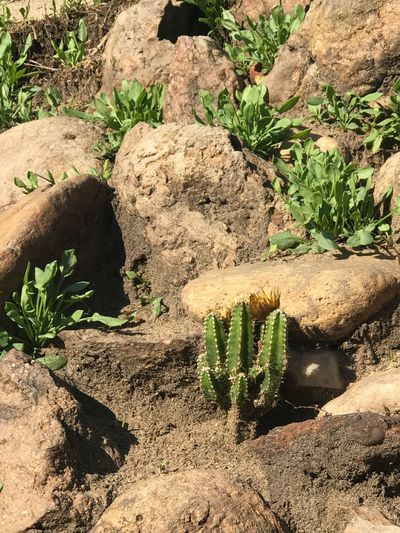 Baby 🌵 Cactus Cactus Flower Nature Tranquility Plant