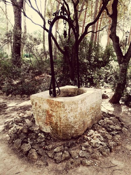 Tree No People Day Nature Growth Outdoors Pozo  Water Well Water Well Trees Hidden Close-up
