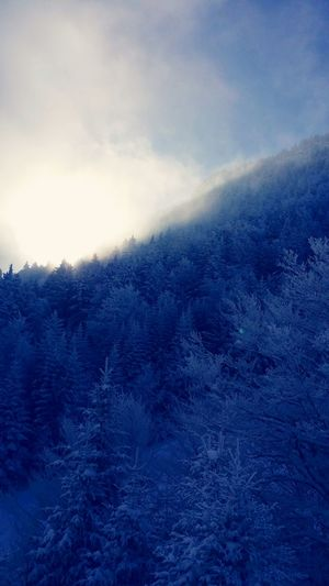 Nature Beauty In Nature Outdoors Montagne Ski AlpesFrancaises Vincent Tocquin Neige Sapins Brouillard Glacé Mountains