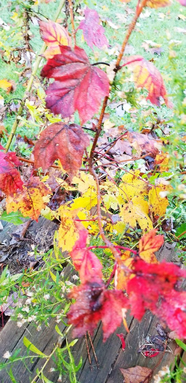 plant, nature, flowering plant, day, plant part, autumn, growth, flower, leaf, high angle view, no people, beauty in nature, yellow, close-up, change, fragility, tree, outdoors, vulnerability, freshness, maple leaf, leaves, messy