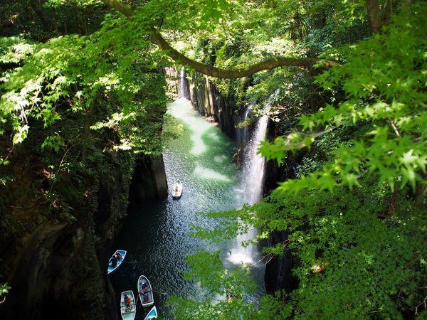 High Angle View Water Tree Green Color Adventure Waterfall Miyazaki, Japan