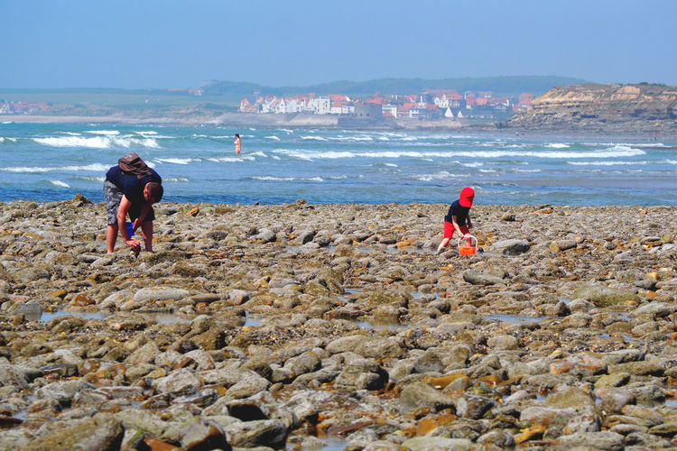 People Collecting Seashells At Beach Against Blue Sky