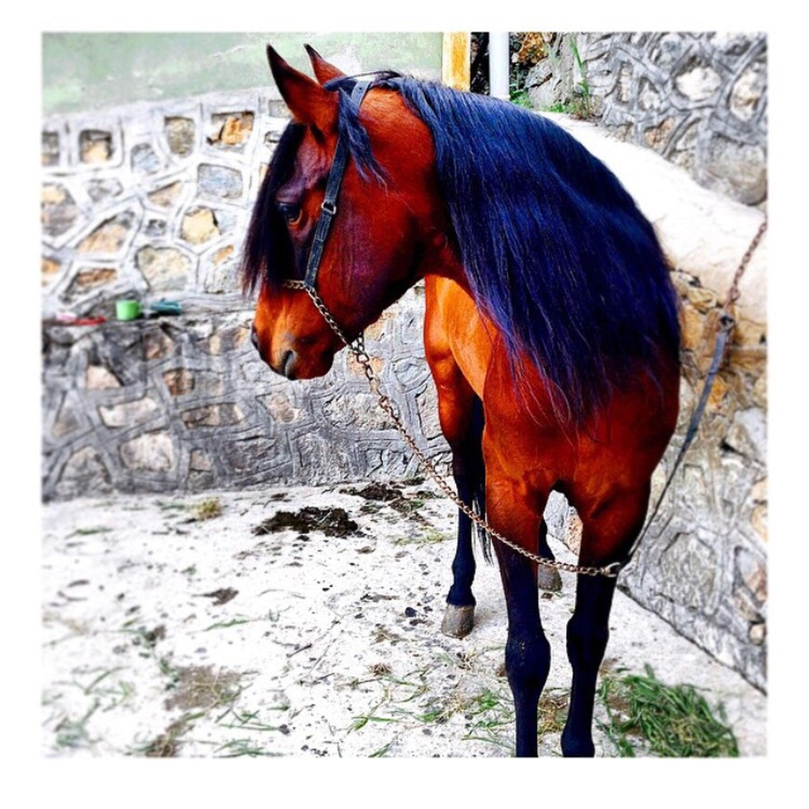 animal themes, transfer print, auto post production filter, livestock, domestic animals, standing, one animal, horse, full length, two animals, brown, side view, zoology, wildlife, vertebrate, mammal, animals in the wild, orange color, outdoors, animal
