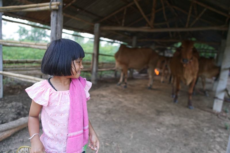 Smiling girl standing against cows in shelter