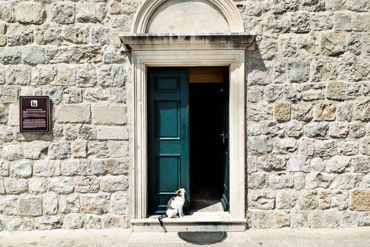 Cat sitting at the door of Franciscan Monastery and Our Lady of the Snows Church in Cavtat, Croatia Adriatic Sea Beautiful Cat Cats Cavtat  Church Croatia Croatian Door Entrance Europe Family Vacation Franciscan Green Holiday Luxury Monastery Nature Summer Travel Travel Destinations Vacation