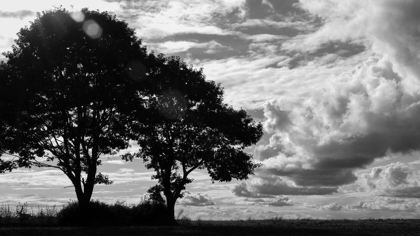 Sky And Clouds Trees Beauty In Nature Black And White Cloud - Sky Day Field Landscape Lens Flare Nature No People Outdoor Photography Outdoors Scenics Sky Tree