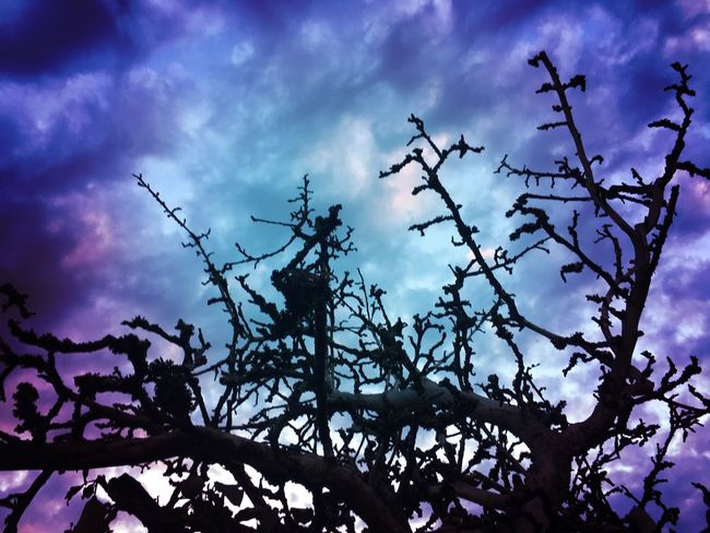 Silhouette Low Angle View Sky Cloud - Sky Scenics Tranquility Branch Nature Beauty In Nature Blue Bare Tree Growth Tranquil Scene Tree Trunk Cloud Outdoors Cloudy Day Dramatic Sky Non-urban Scene