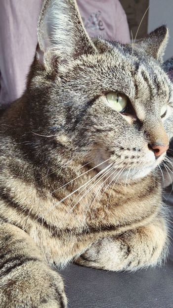 Domestic Cat Pets One Animal Cat Indoors