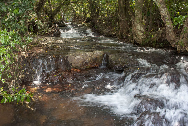 Water Stream EyeEmNewHere Water Tree Forest Plant Beauty In Nature Land Flowing Water Nature