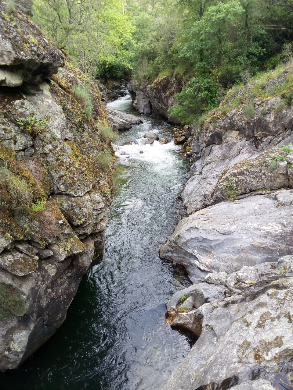 river, waterfall, nature, water, adventure, no people, forest, outdoors, tree, day, beauty in nature
