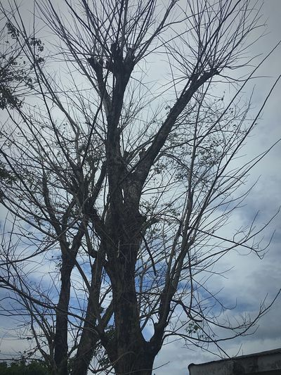 Withered Tree Nature Branch Low Angle View Beauty In Nature Sky Bare Tree Silhouette Tranquility No People Outdoors Day Sky And Clouds Still Life Stem Branches Nature Broken Dreams Daydreaming