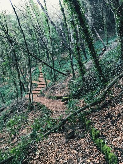 Walking around the crater Ischia Cratere Crater Trees Wintertime Nature Forest Tranquility Tranquil Scene Beauty In Nature Tree Scenics Outdoors Tree Trunk No People Landscape Day Growth