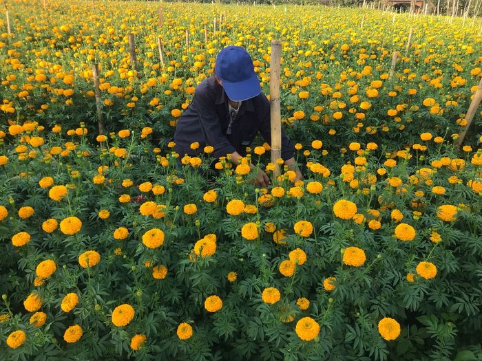 Shadow of person on yellow flowers on field
